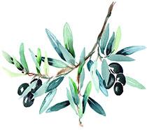 leckere-oliven